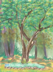 The Crooked Tree9 x 12 soft chalk pastel onWatercolor paper 2016