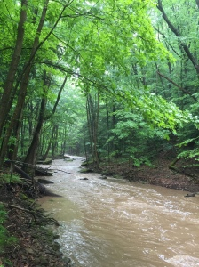 Shull Run June 2, 2016 after a good rain