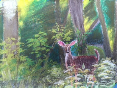 Doe #2, 9 x 12 soft chalk pastel on Strathmore drawing paper, June 2016