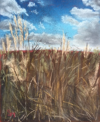 Kansas prairie grass, 8x10, August 2016