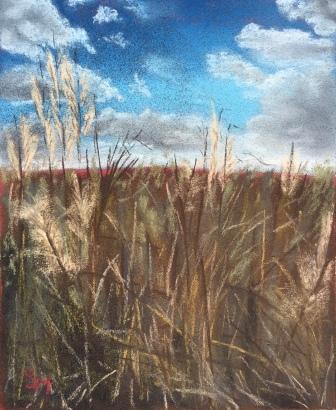 Kansas prairie grass, 8x10, August 2016