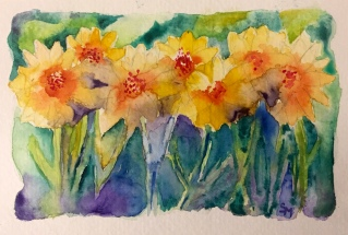 Daffodils, 4 x 6, watercolor, April 2017