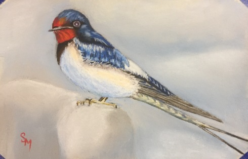 Swallow, 5x7, January 2017