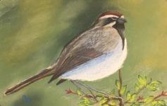 Sparrow, 5x7, January 2017