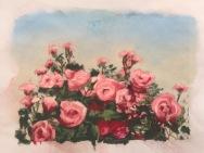 Roses 3, 5 x 7, pastel, February 2017
