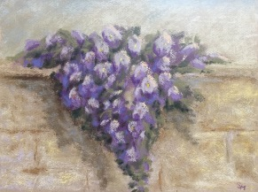 Wisteria, 9x 12, Pastel, May 2017