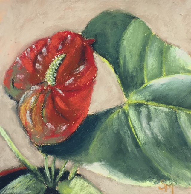 Anthurium, Day 6, 6x6, pastel, 14 December 2018